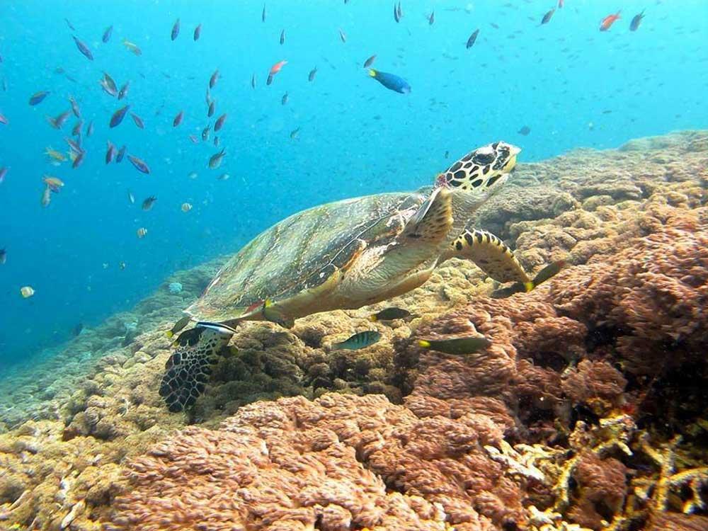 Lembongan snorkelling